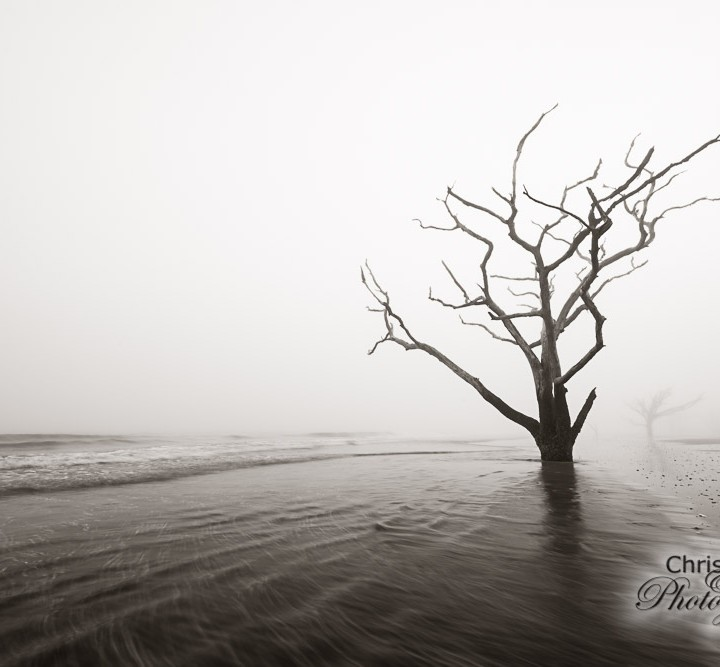 Foggy Boneyard Beach