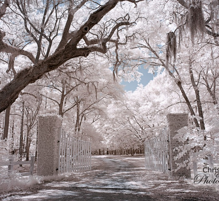 Hopsewee Plantation in Infrared