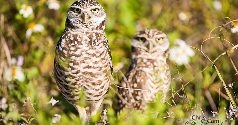 Annual Florida Birding Adventure
