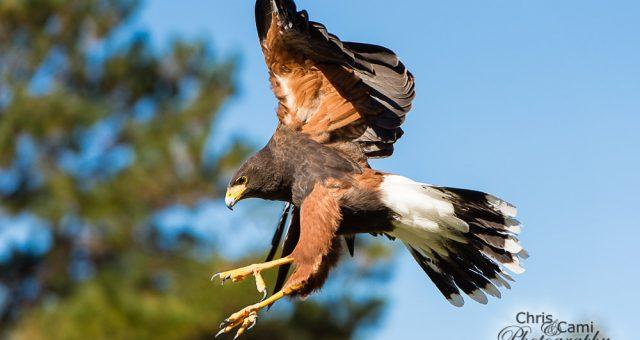 Charleston Center for Birds of Prey