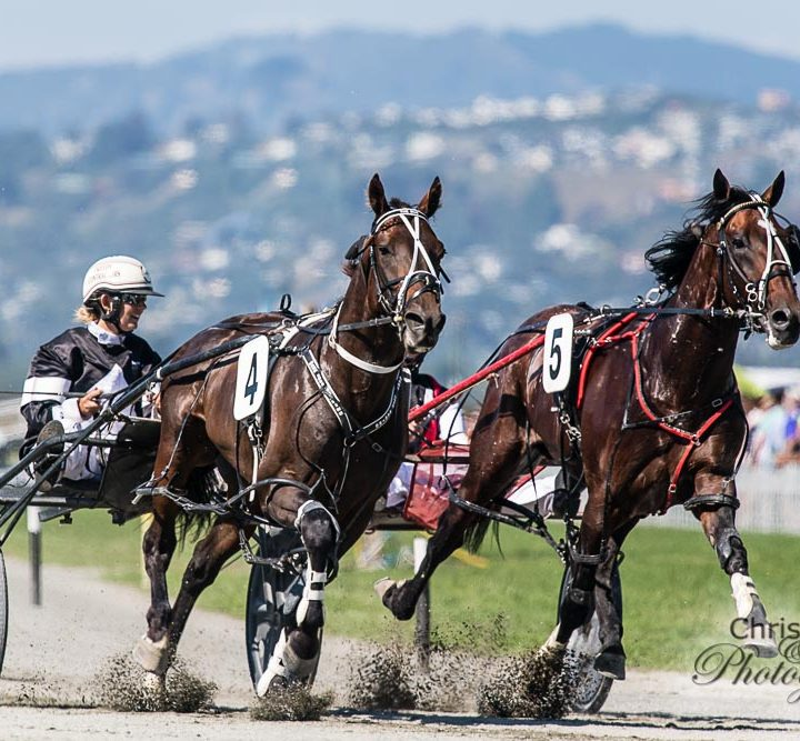 New Zealand Harness Racing