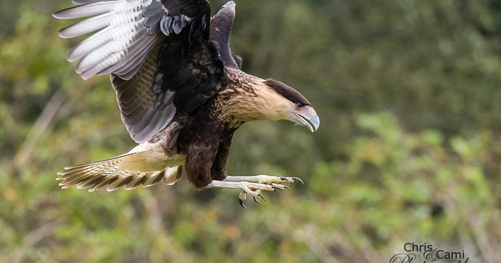 Wildlife Photography Workshop at Center for Birds of Prey