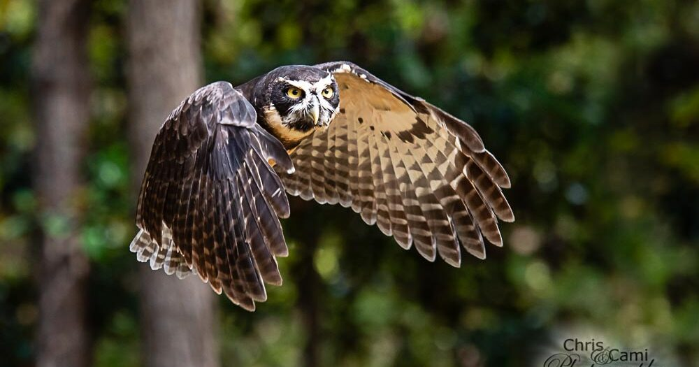 Wildlife Workshop at Center for Birds of Prey