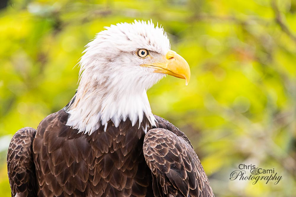 201101-Charleston-Wildlife-Photographer-Center-for-Birds-of-Prey-0086.jpg