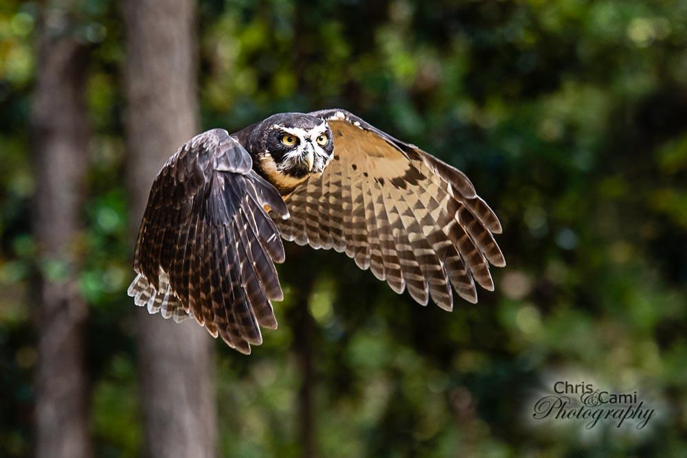 201101-Charleston-Wildlife-Photographer-Center-for-Birds-of-Prey-0106.jpg